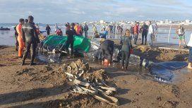 Ballena encallada en Punta Mogotes - Crédito: 0223