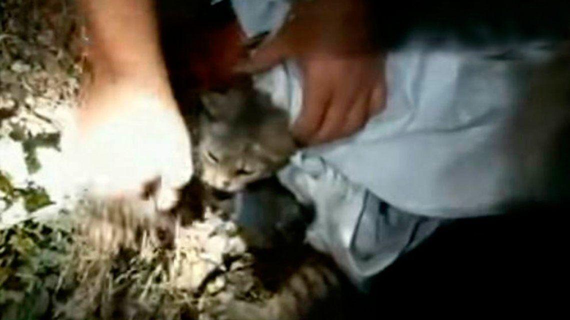 Costa Rica: usaban gatos para entrar celulares y cargadores a la cárcel