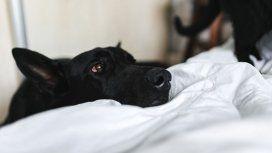 El perro, un guardián impecable con un método muy particular
