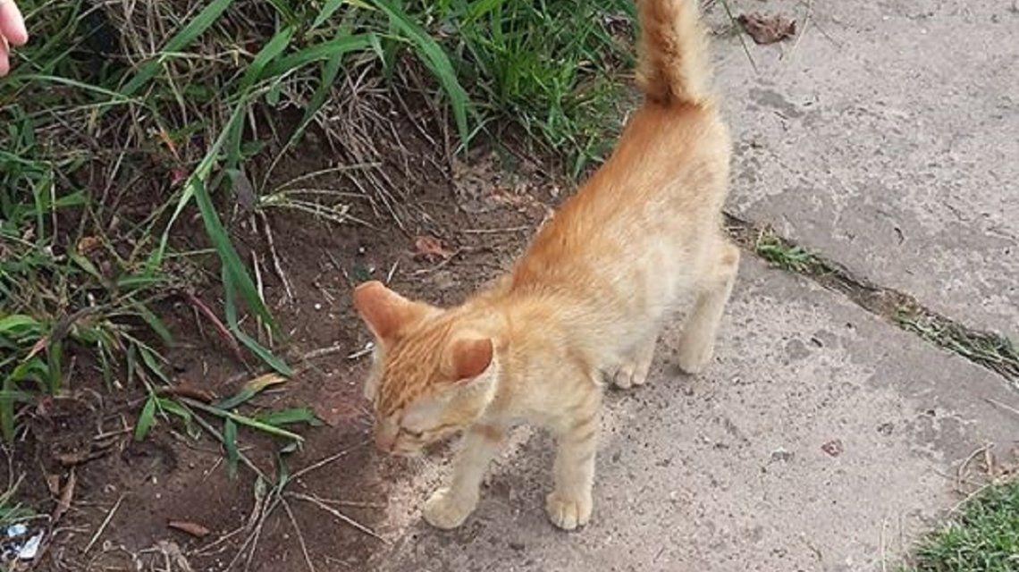 La Plata: tiraron a un gatito desde una camioneta y una vecina los denunció por Facebook