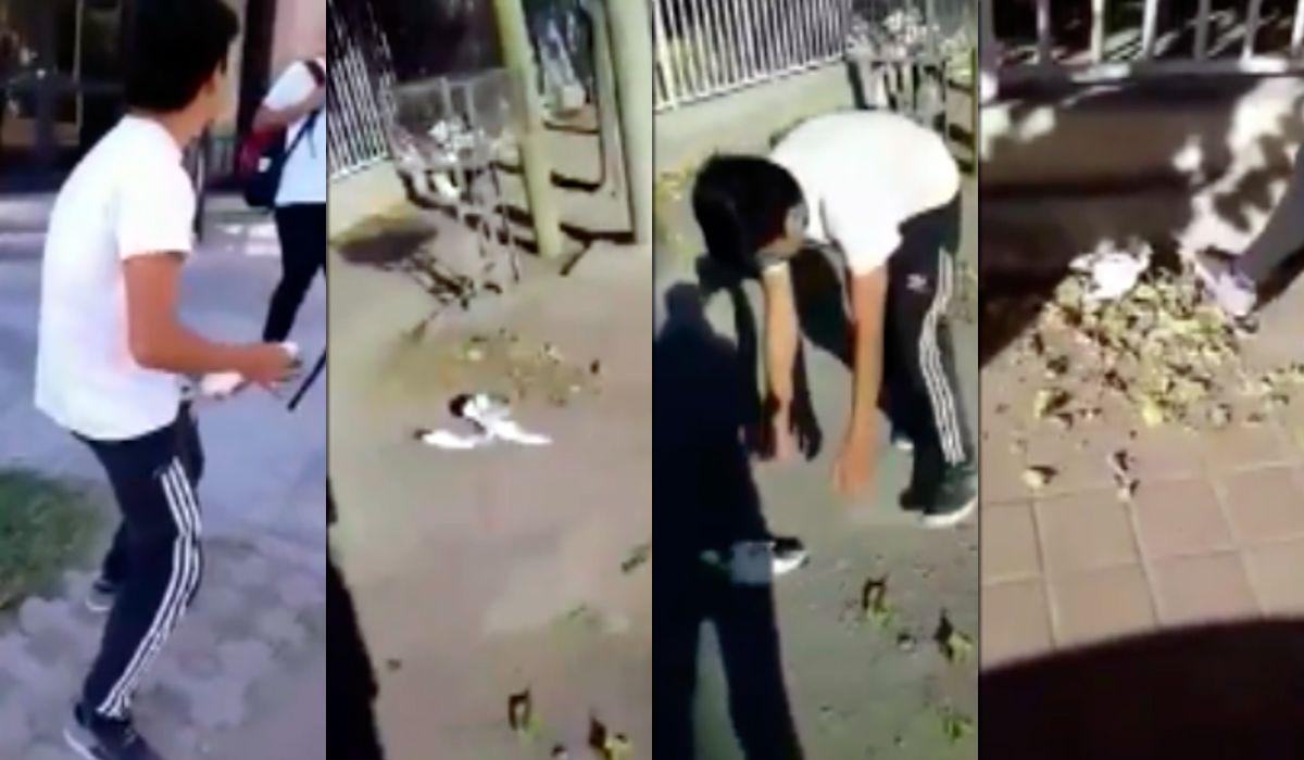 Escándalo en San Juan por el video de un grupo de estudiantes que maltratan a una paloma