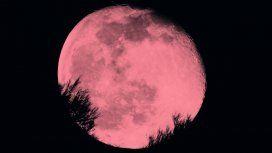 Luna Rosa: hoy se verá un fenómeno astronómico que no se da desde hace 50 años