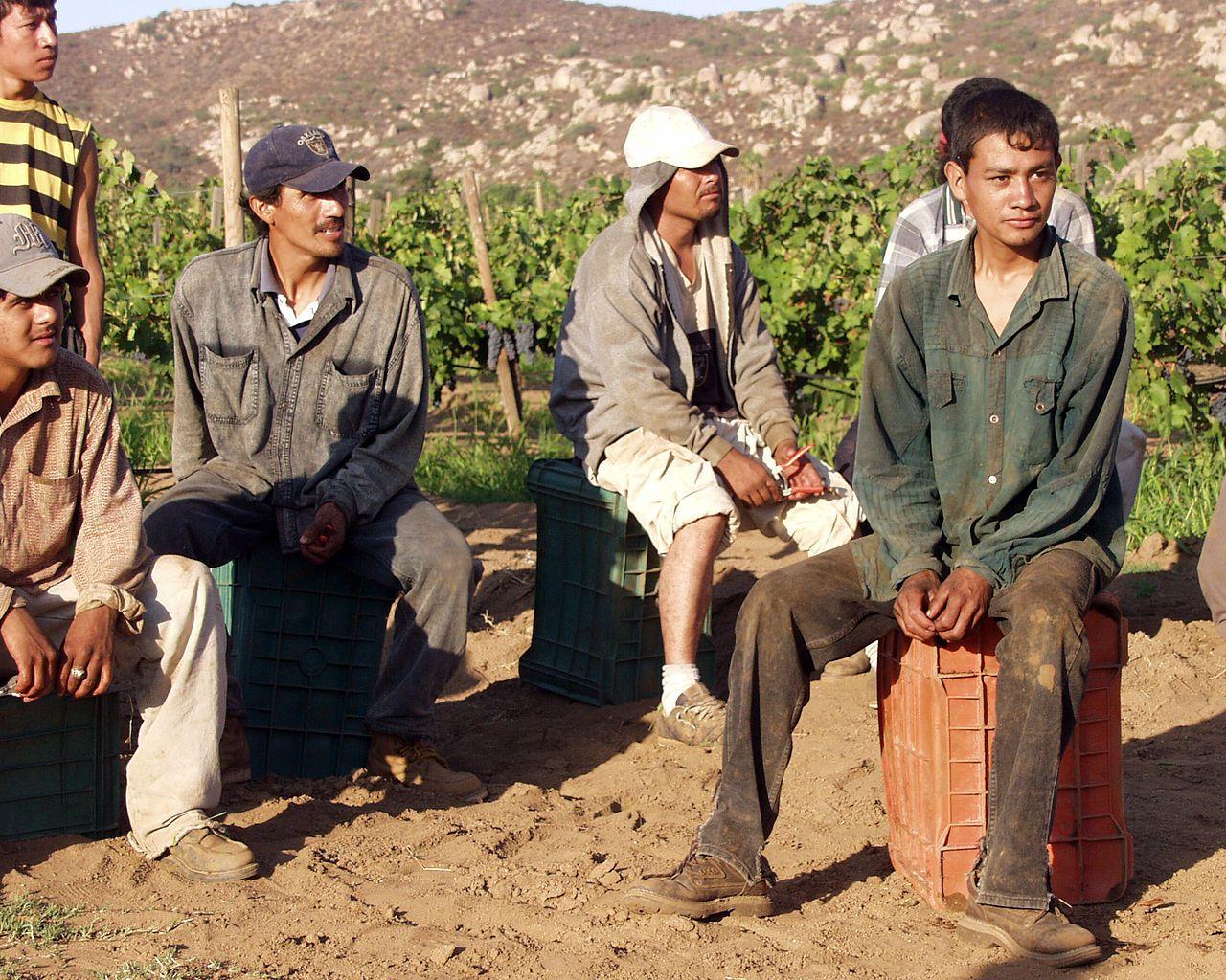 Trabajadores mexicanos son los que más sufren la explotación laboral