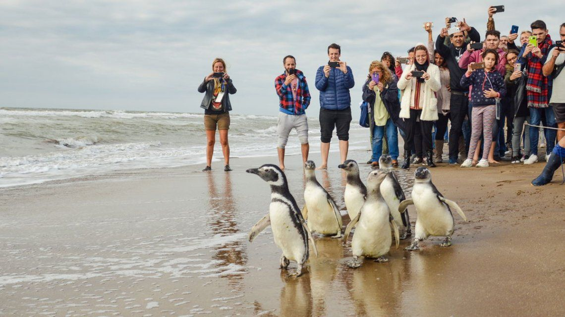 Los pingüinos de Magallanes fueron liberados tras varios meses de terapia