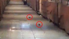 Ratas en el Paseo de Artesanos de Mar del Plata