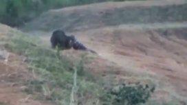 El hombre fue atacado por un oso con el que quiso sacarse una selfie