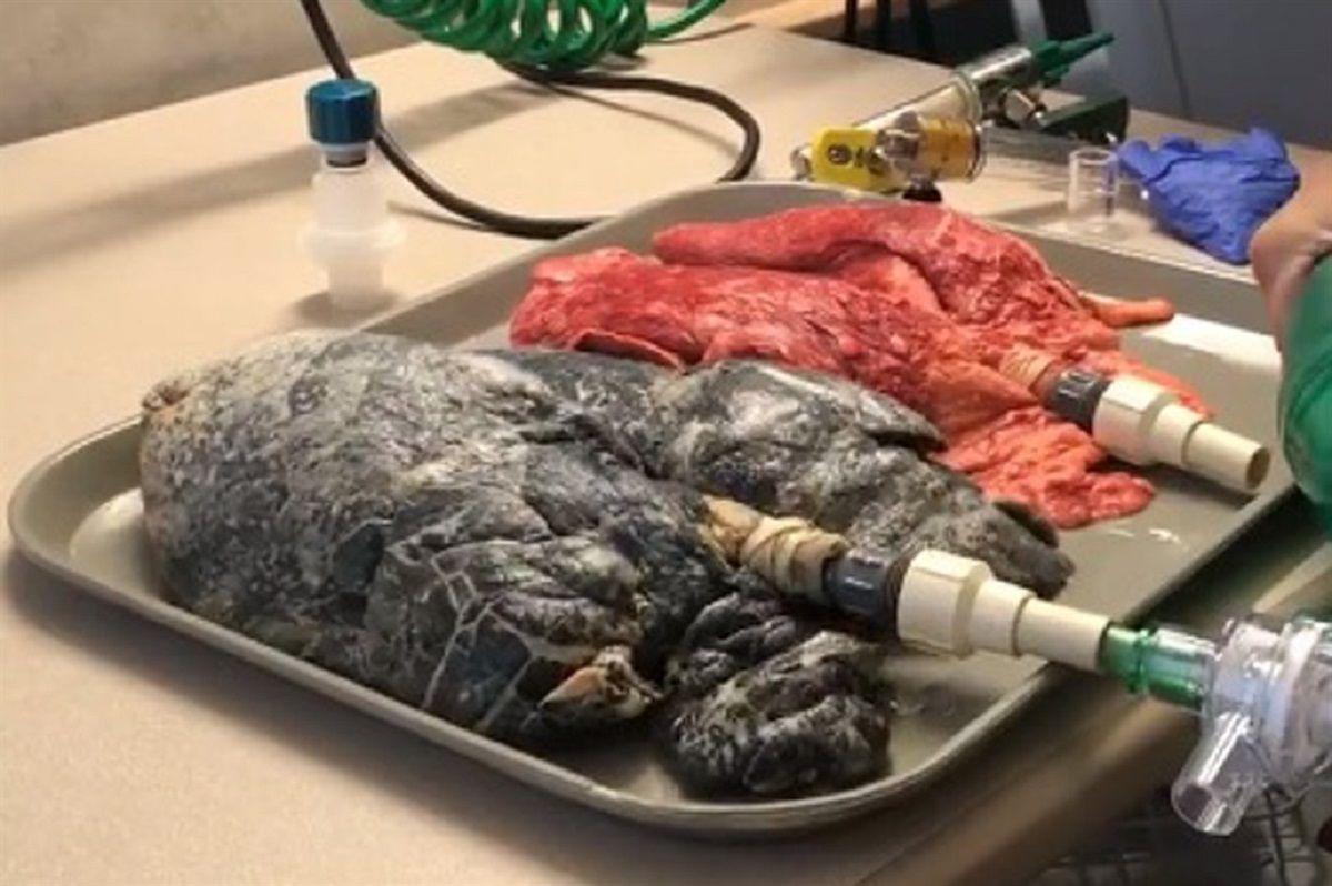 Video: Así respiran los pulmones de un fumador