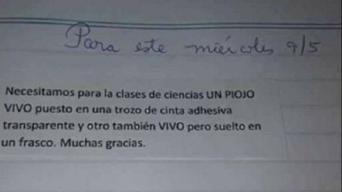 """SALTA: """"Traer dos piojos vivos"""", la desagradable tarea que una maestra les dio a sus alumnos"""