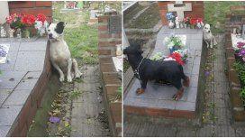 El más fiel: un perro no se despega de la tumba de su dueño en un cementerio de Boulogne