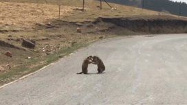 La cosa se puso peluda entre estas dos marmotas