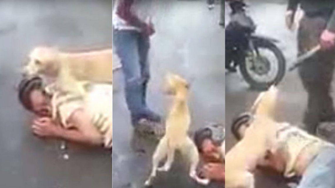 Un perro defendió a su dueño que dormía borracho en la calle