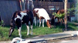 Roban caballos de la calle o campos en La Plata