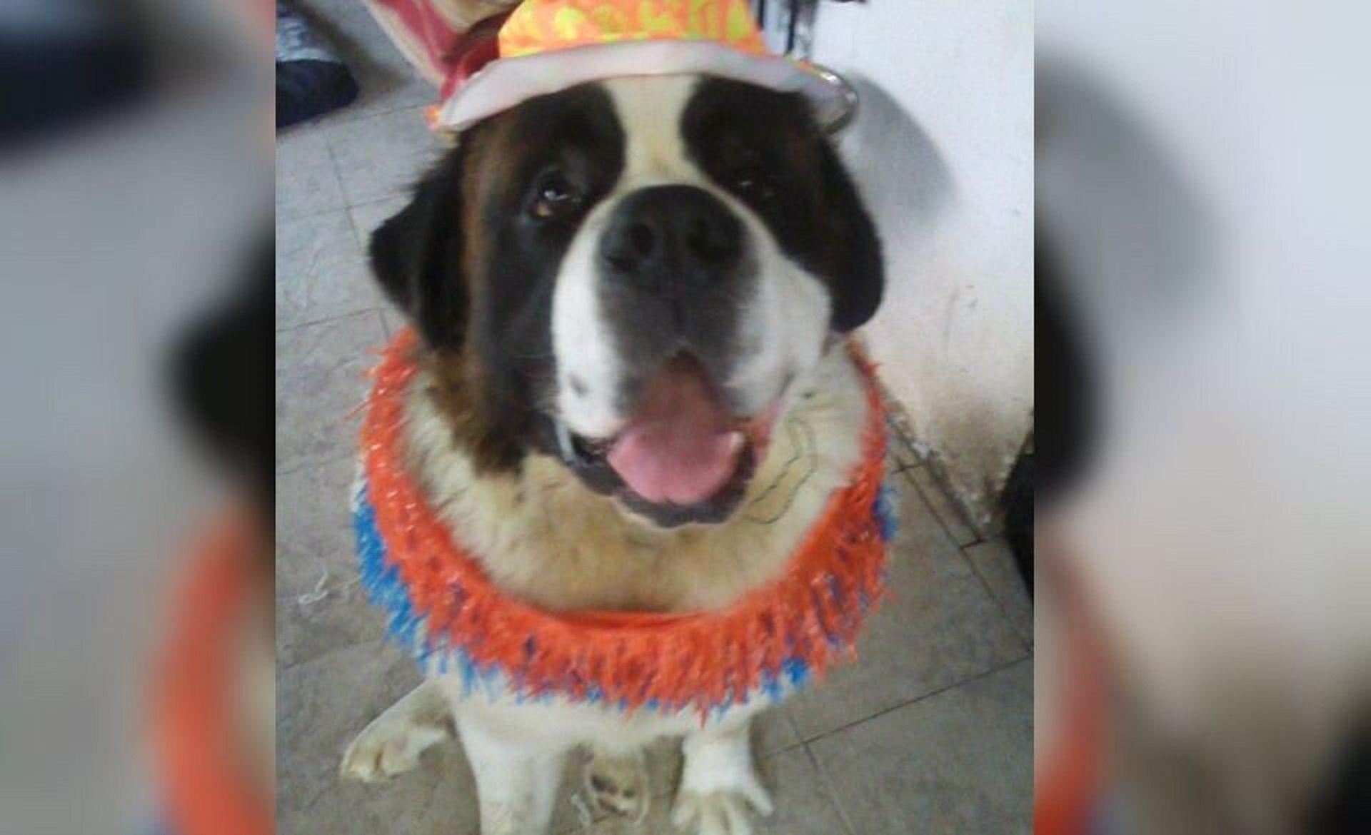Mandó a su perro a bañar a la veterinaria y se lo devolvieron muerto