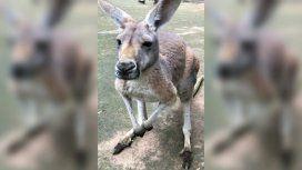 La canguro murió como consecuencia del ataque a piedrazos