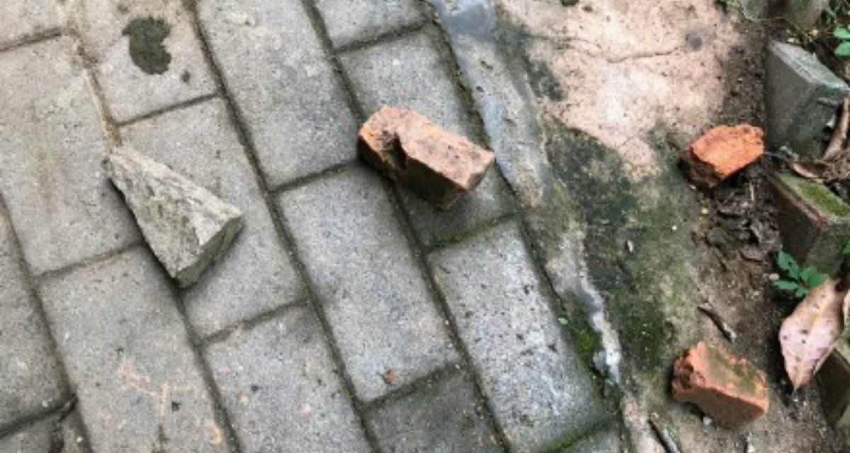 Los visitantes tiran piedras y pedazos de ladrillos a los canguros para hacerlos saltar