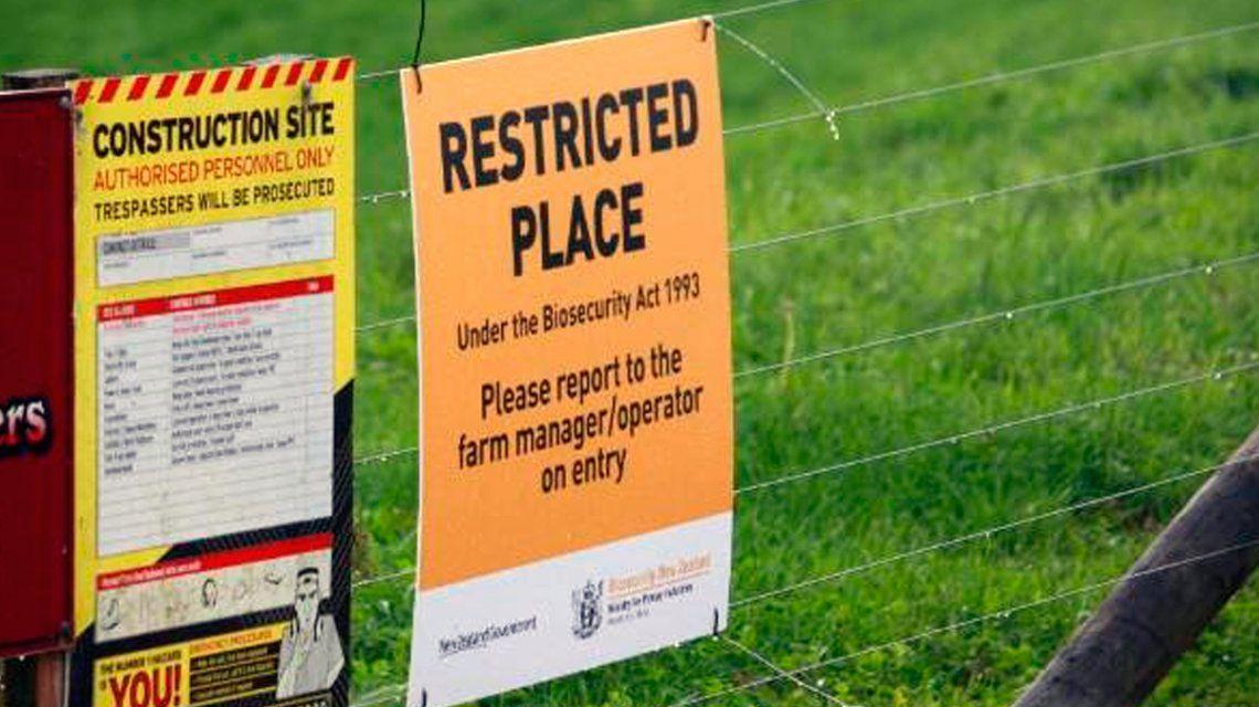 Nueva Zelanda sacrificará más de 150 mil vacas para erradicar una peligrosa enfermedad