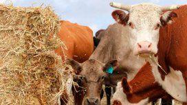 ¿Fin del maltrato animal? Crearon carne elaborada en un laboratorio