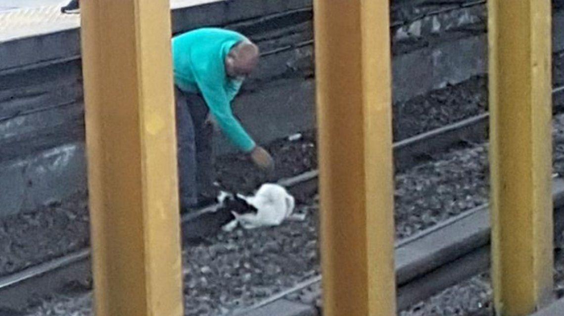 La línea B de subte estuvo interrumpida casi una hora ¡por culpa de un perro!
