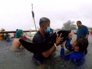 tailandia: una ballena murio despues de tragarse 80 bolsas de plastico