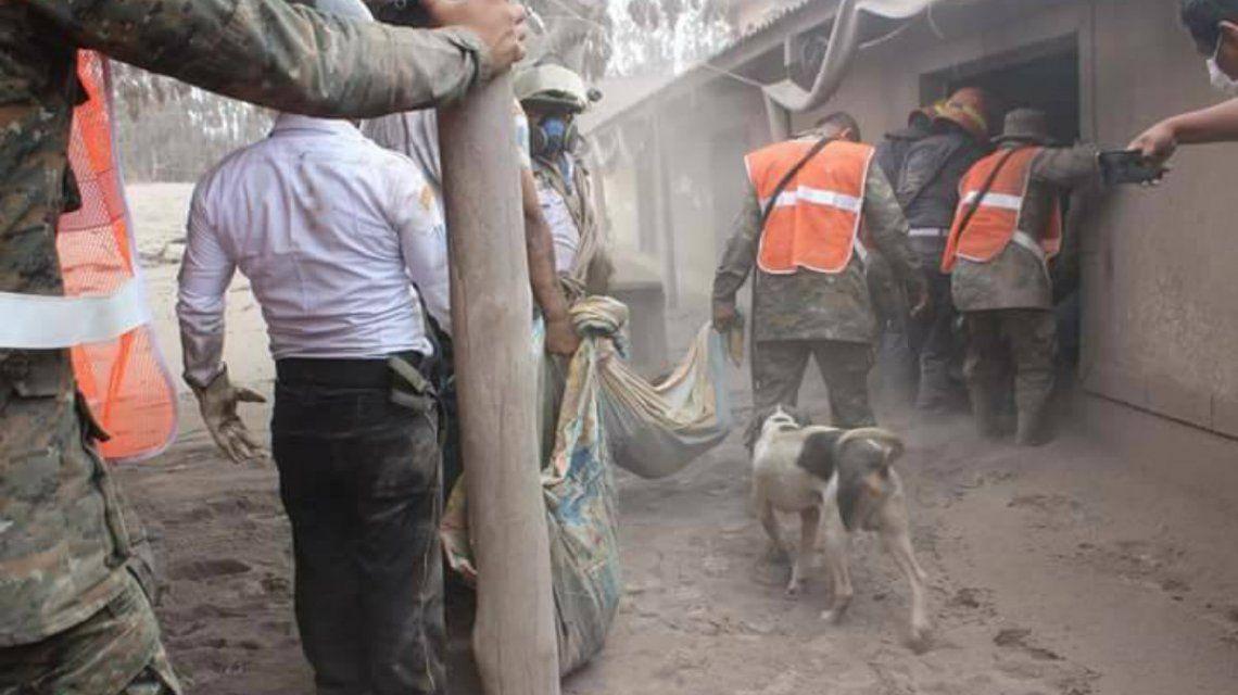 Rambo se quedó junto a los restos de sus dueños a pesar del peligro