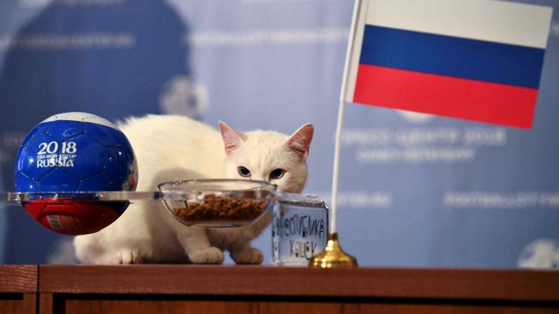 El gato Aquiles,  el oráculo oficial de Rusia 2018, anticipó quién ganará el primer partido del Mundial