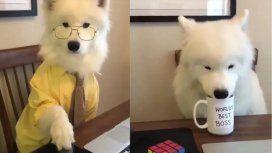 Si no te gusta te despido: su jefe le mandó un video, ella lo publicó y se viralizó