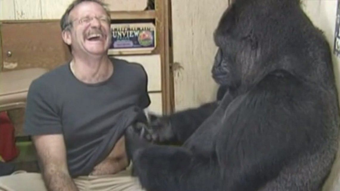 Koko con Robin Williams