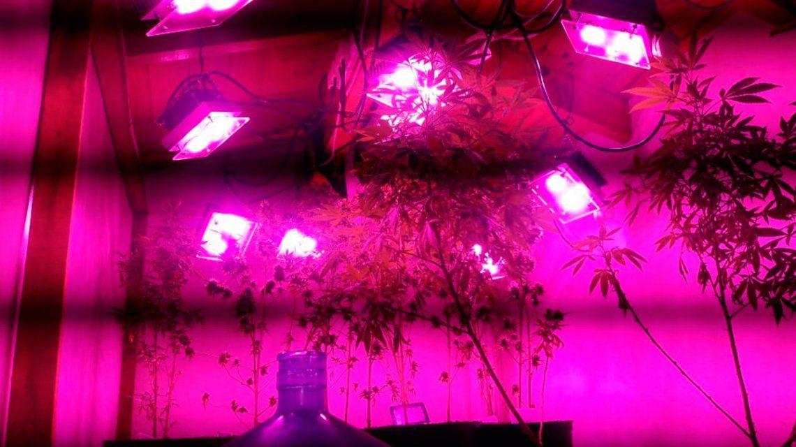 Desarticularon a los Masterchef: cultivaban marihuana gourmet y la vendían en redes sociales