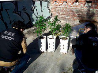 desarticularon a los masterchef: cultivaban marihuana gourmet y la vendian en redes sociales