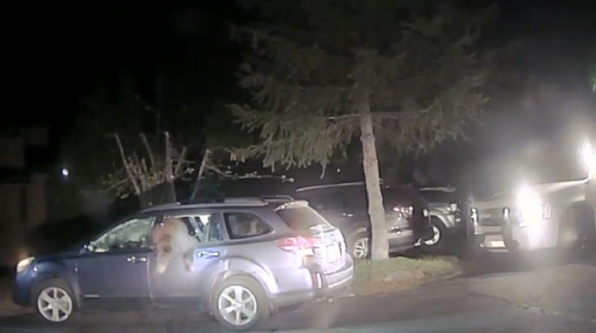 Los sheriffs tuvieron que rescatar al oso curioso que quedó atrapado en el auto