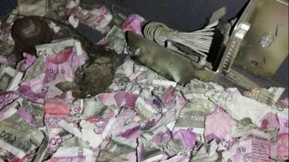Un grupo de ratas destruyó los billetes de un cajero