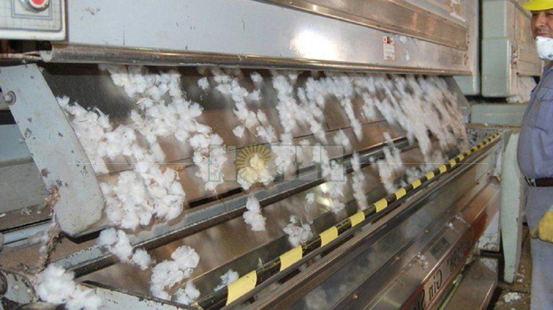 Máquina de algodón