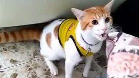 El gato que grita los goles de Colombia