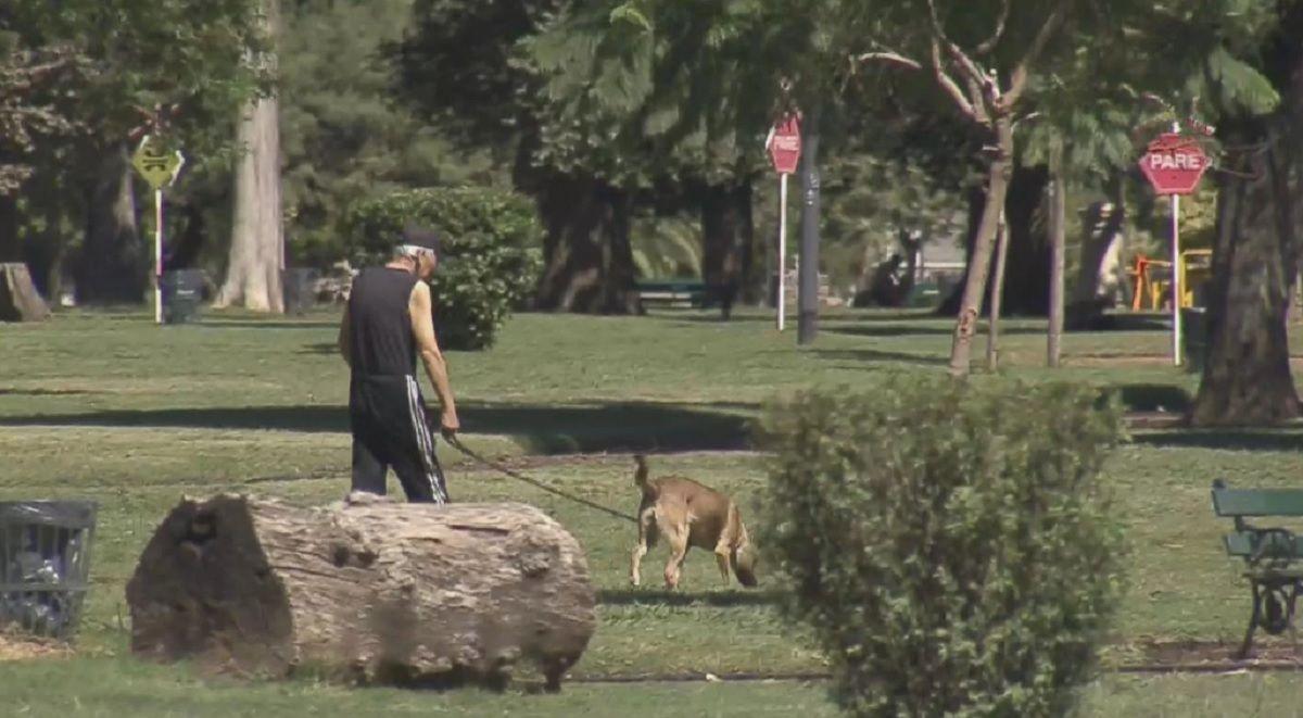 Identificaron a la mujer acusada de envenenar 20 perros en el Parque Avellaneda
