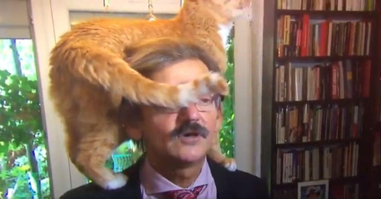 Un gato interrumpió una entrevista en vivo