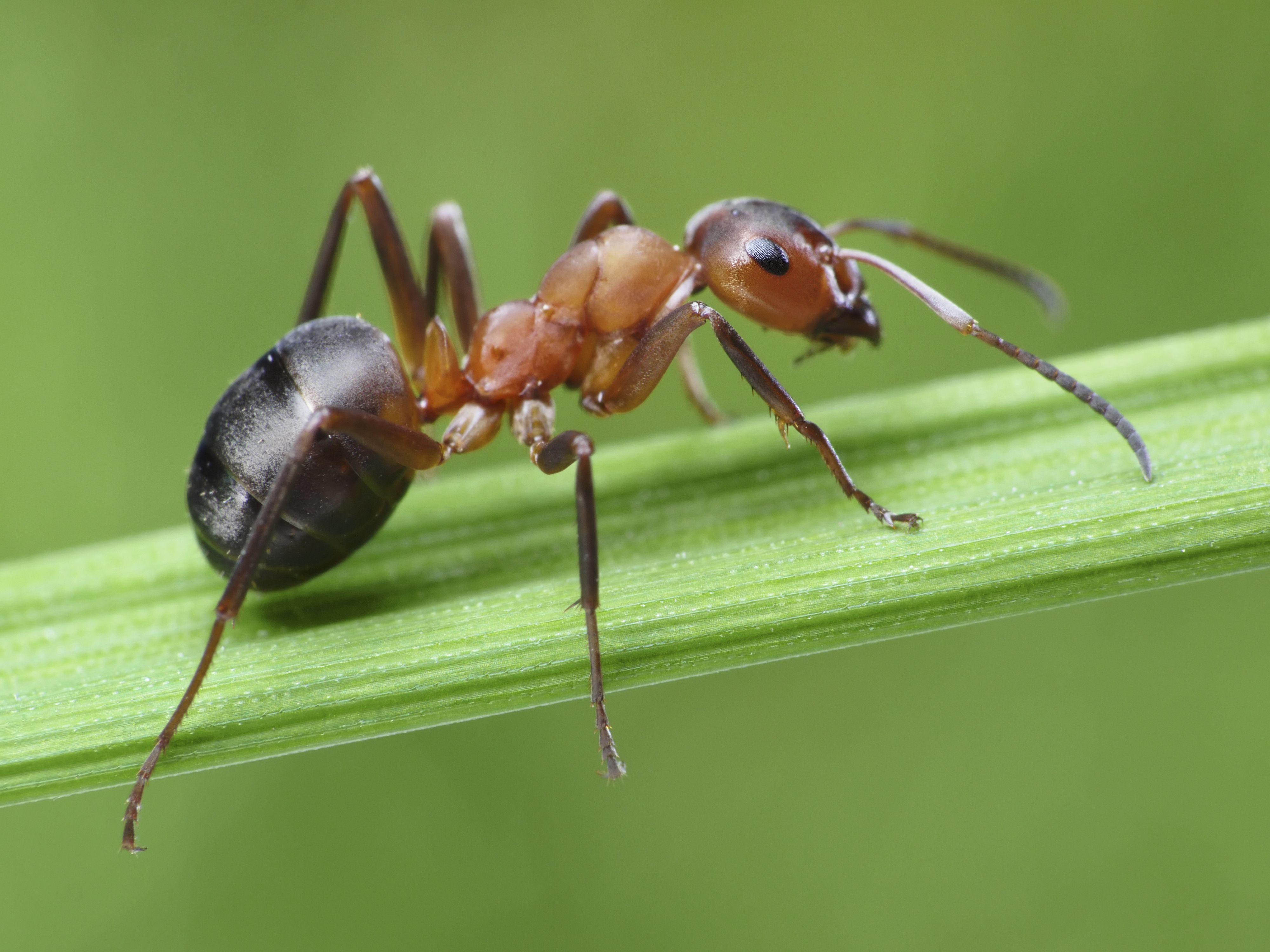 La verdadera cara de una hormiga a través de un microscópico electrónico