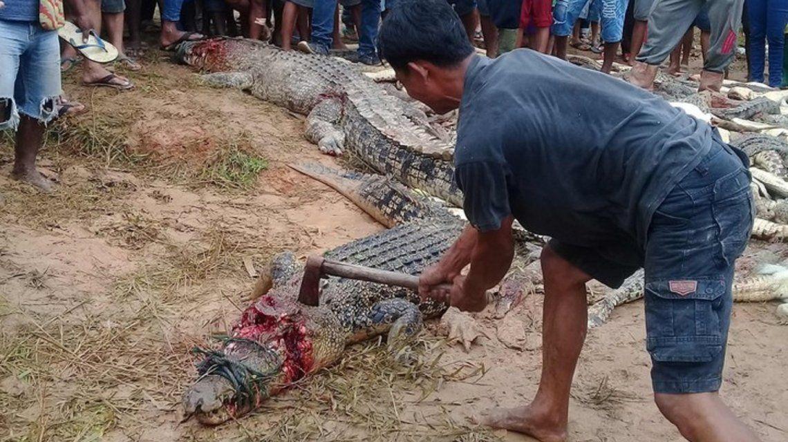 Insólito: mataron casi 300 cocodrilos para vengar la muerte de un hombre