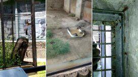 Animales muertos, ratas, cucarachas e infección: la decadencia del ex Zoo porteño