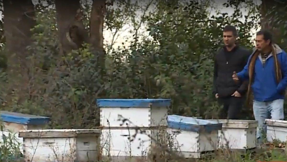 Crisis de los apicultores