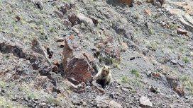 Turistas encuentran a un animal mitológico que se creía extinto