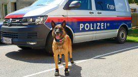 La policía canina de Zúrich, en Suiza, anda en botas por el calor del asfalto