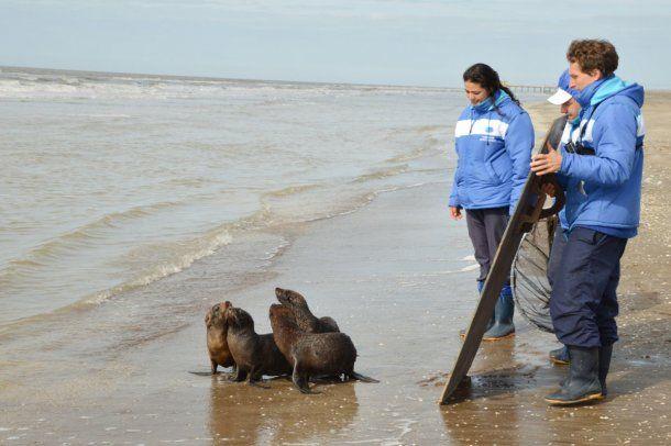 No estaban muy seguros al principio, pero en seguida entraron en el agua