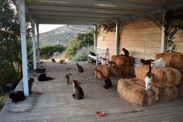 Hay 55 gatos que viven en la isla griega de Siros, en el mar Egeo