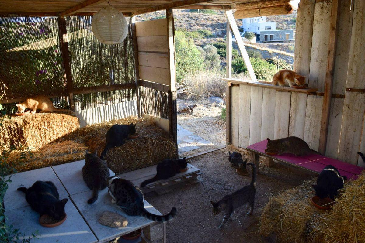 Los nuevos cuidadores deberán hacerse cargo de la colonia de gatos salvajes y no tanto