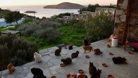 Los bellos atardeceres en el mar Egeo se aprecian mejor con compañía felina
