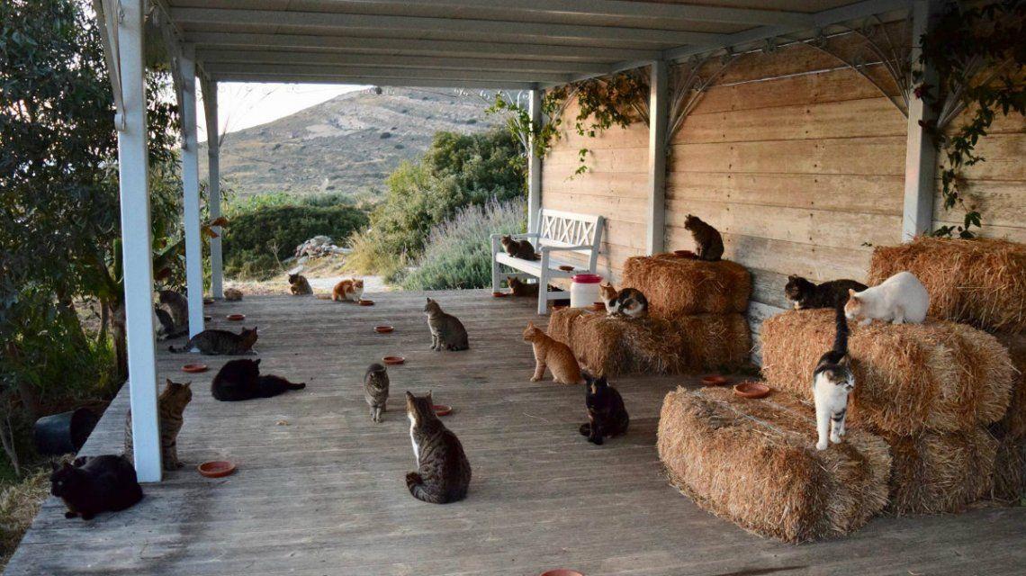 Hay 55 gatos que viven en la isla griega de Siros