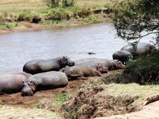 un turista sacaba la foto de un lago y un hipopotamo lo mato
