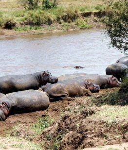 Un turista sacaba la foto de un lago y un hipopótamo lo mató