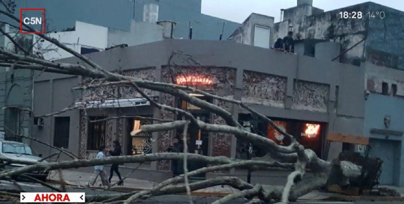 ¡De milagro no ocurrió una tragedia! Se desplomó un enorme árbol en Palermo