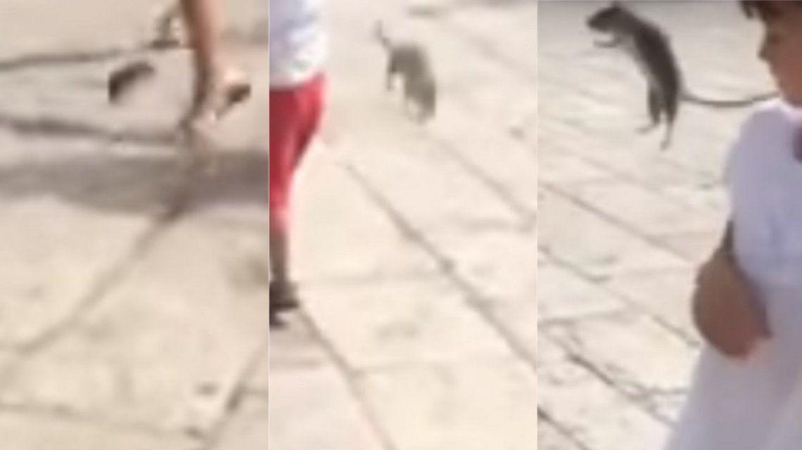 Pateó una rata y le dio a una nena en la carta